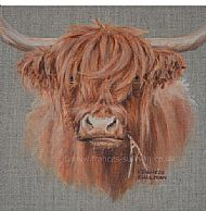Young Highland - Highland cattle SOLD