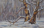 Old Birch in the Snow