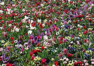 A carpet of colourful spring flowers