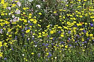Patch of Colourful Wildflowers