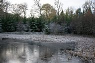 The Secret Woodland Pond in Winter