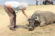 Liz and buffalo
