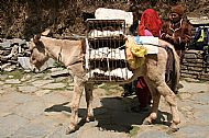 Hens being transported by donkey