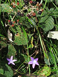 Brambles and many flowers to be seen