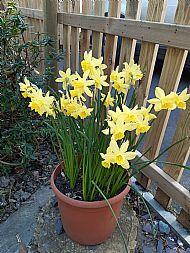 COVID Spring
