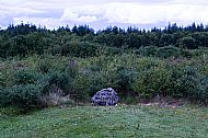 Life and Death in  Culloden