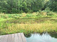vegetation in pond