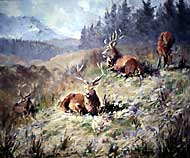 Stags on low ground