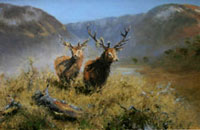 Stags on high ground, Glenfeshie (sold)