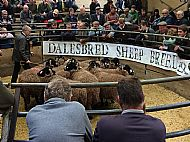 Leyburn auction mart