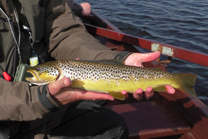 boardhouse trout
