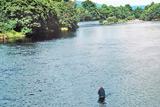 bridge pool, river conon
