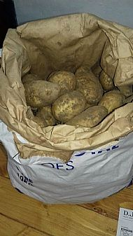 New potato - Grown in Shorwell