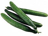 XL Cucumber