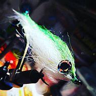 green back baitfish