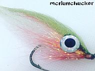 big eye roach