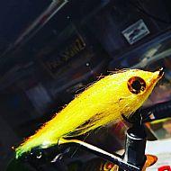 yellow baitfish