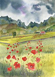 Poppies at Poolewe