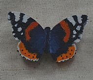 red admiral brooch