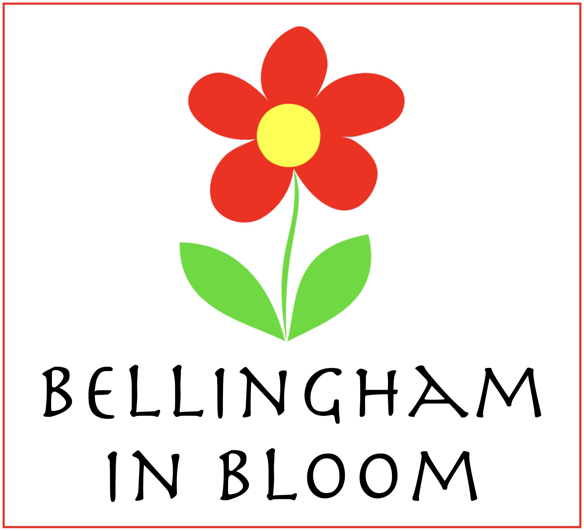 bellingham in bloom