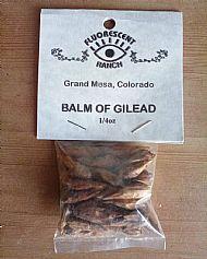 Balm of Gilead (balsamPoplar)