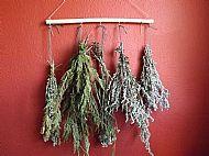 Herb Dryer Hanger