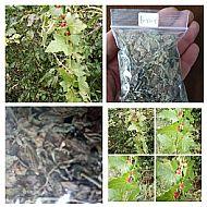 White Bryony (false Mandrake)