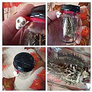 Datura Pod Witch Bottle N02