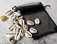 Cowrie Shell Divination Set (21 shells)