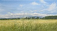David E Johnston RSW, A Summer Place, The Mearns