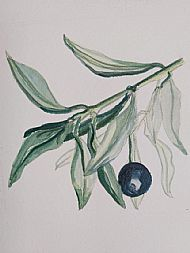 Olive Branch SOLD