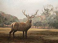 David Turner OBE, Autumn Stag