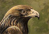 Eagle, 6