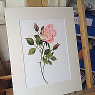 Country Cottage Rose