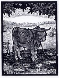 The Grey Ox