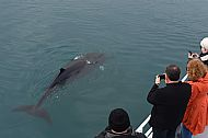 Whalewatch spectacular
