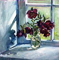 Hellebore in a Windowsill
