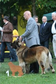 Yenta & Bill in Leonberg 2011