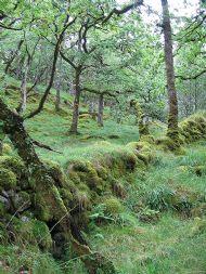 Ariundle Nature Reserve