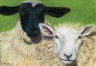 Lamb Chops and Flora