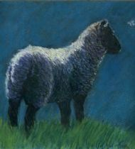 Sunlit Lamb