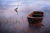 Heron And Boat