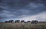 Runner-up<br>Elephant Herd at Dusk