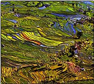 Top Travel Image<br>Yunnan Rice Terraces