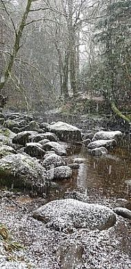Winter at Sutherlands Grove by Innes Mackichan