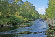 river alness salmon fishing, loanridge beat