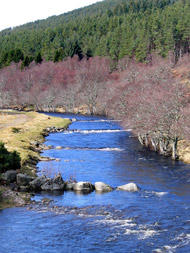 meadow flats river alness