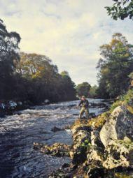 river alness salmon fishing, kildermorie beat