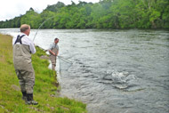 salmonquest salmon fishing lets, river conon, upper fairburn fishings