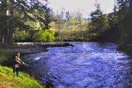 salmonquest salmon fishing holidays, river alness, novar fishings